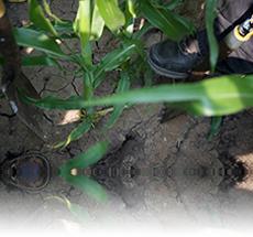 Ag Soil Testing for Precision Farming